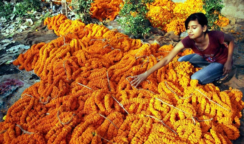 girl, buying, marigold, garlands, Celebrating, Diwali, festival