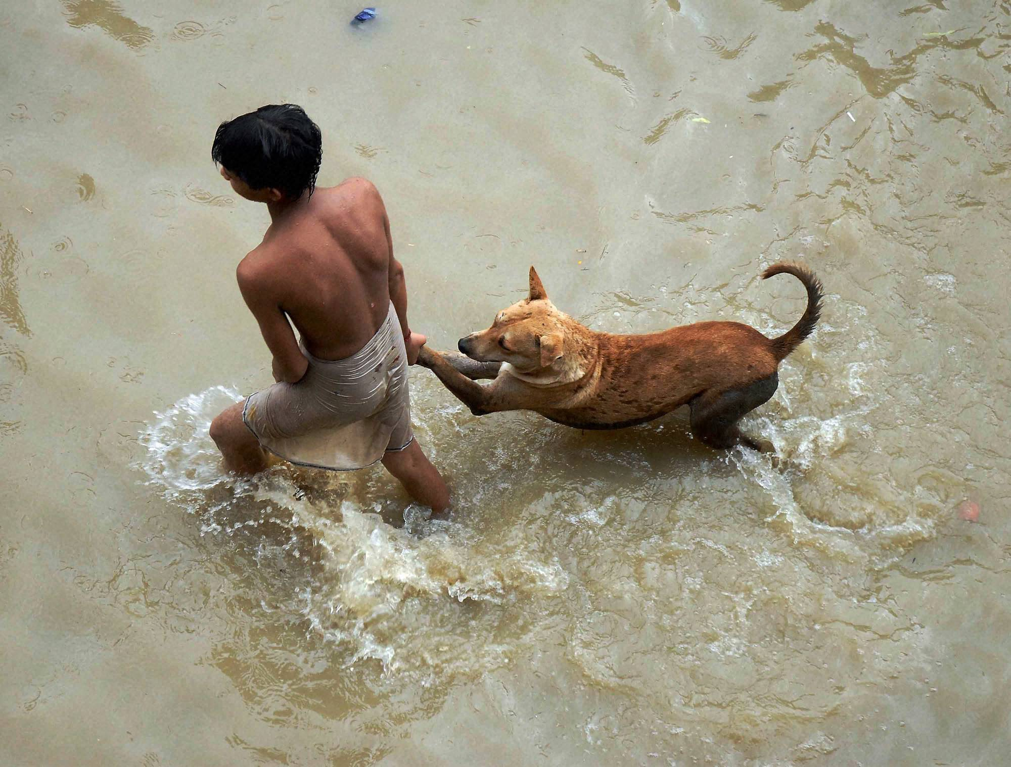 boy, plays, street, dog, road, flooded, River, Ganga, Kalighat Kali, temple, Kolkata