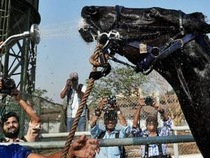 A horse being washed at the Mahalaxmi Race Course in Mumbai