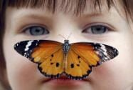 Georgia Ball Keely, 4, holds still as a Danaus Chrysippus or 'plain tiger' butterfly lands on her nose