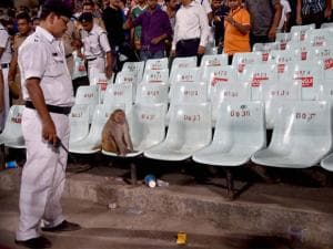 A monkey appears in the stands during IPL Match at Eden Garden in Kolkata_02.