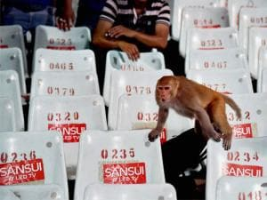 A monkey appears in the stands during IPL Match at Eden Garden in Kolkata_03.