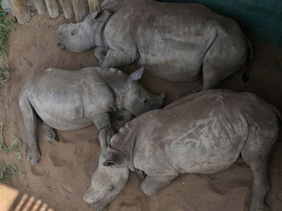 Rhinos, Rhino Orphanage, Reserve,Rhino calves, Wildlife, Forest South Africa, Business Standard, Business, Business Standard epaper, Photo, Picture of the day