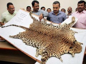 Police displaying the leopard skin seized from smugglers in Thane, Mumbai