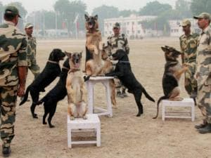 BSF jawans rehearse for the Golden Jubilee event