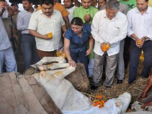 Former Chief Minister Harish Rawat paying tributes to police horse Shaktiman in Dehradun