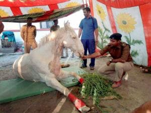 Police horse Shaktiman whose leg had to be amputated after he was beaten up at a BJP rally, passed away on March 14