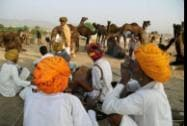 Herders sit near their camels during the Pushkar Camel Fair