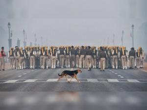 A stray dog crosses the road as the CISF contingent rehearses ahead of the Republic Day parade