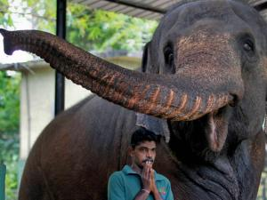 A Sri Lankan zoological garden employee prays before starting a blessing ritual to bless animals by anointing oil to mark the Sinhalese and Tamil traditional New Year  in Colombo
