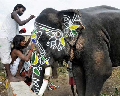 Mahouts decorate an elephant