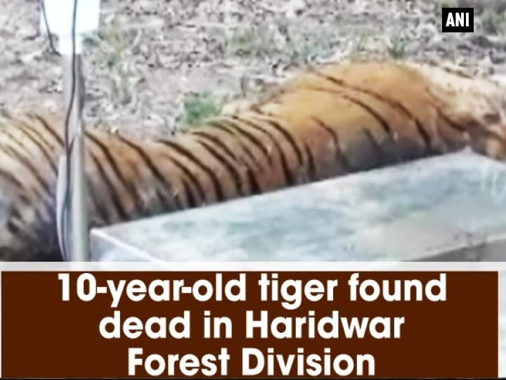 10-year-old tiger found dead in Haridwar Forest Division