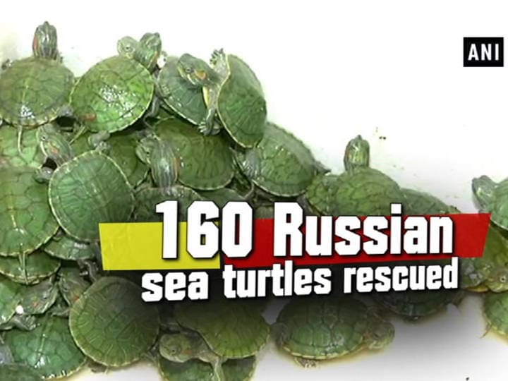 160 Russian sea turtles rescued