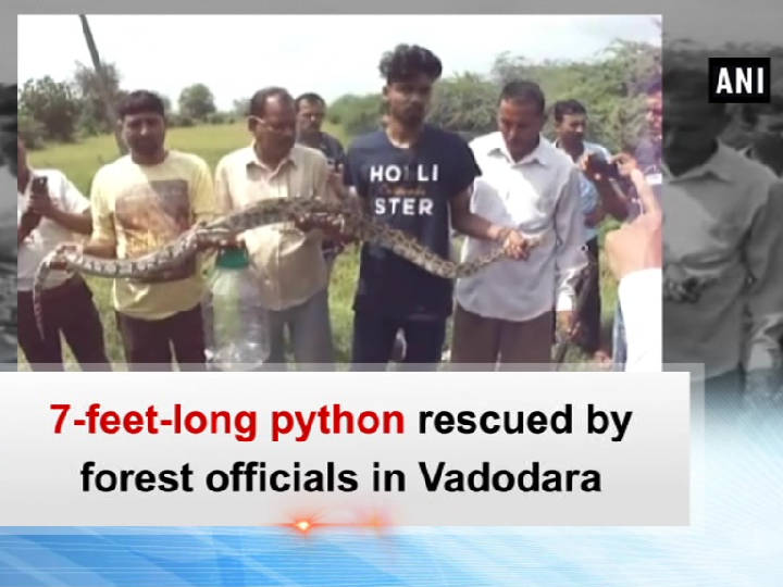 7-feet-long python rescued by forest officials in Vadodara
