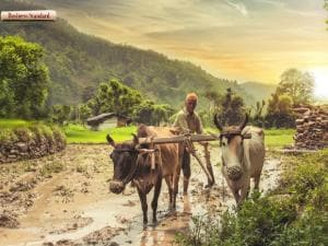 Union Budget 2018-19: This is what the agriculture sector wants from FM Arun Jaitley