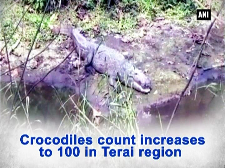 Crocodiles count increases to 100 in Tarai region