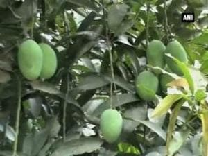 DDA orchards thrown open to public