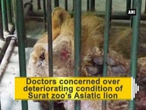 Doctors concerned over deteriorating condition of Surat zoo's Asiatic lion