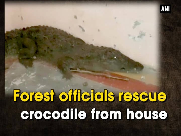 Forest officials rescue crocodile from house
