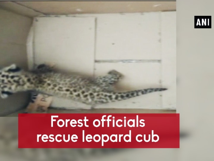 Forest officials rescue leopard cub