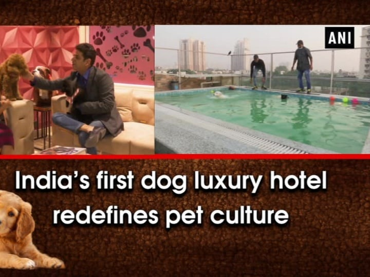 India's first dog luxury hotel redefines pet culture
