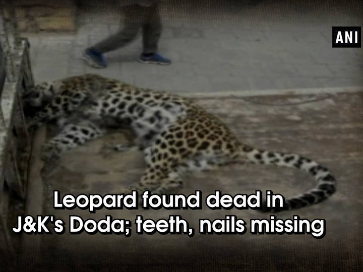 Leopard found dead in J and K's Doda; teeth, nails missing