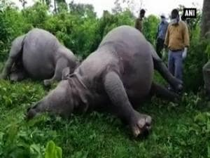 Lighteing kills two rhinos at Ramsai Extension in WB