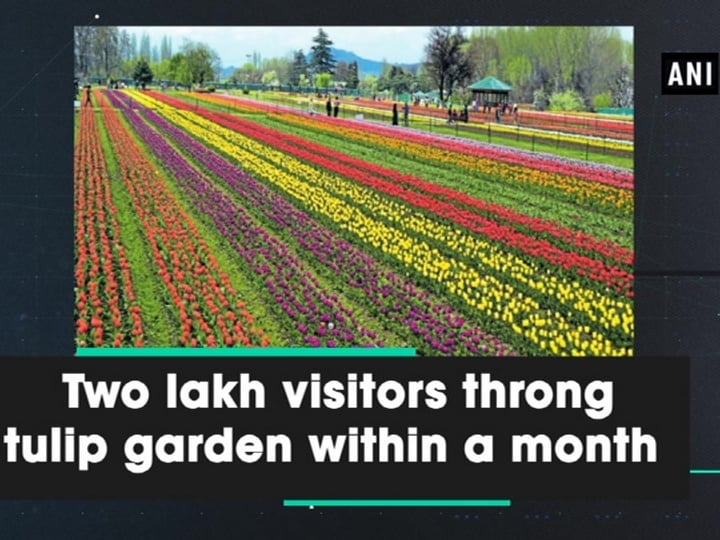 Two lakh visitors throng tulip garden within a month