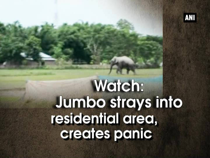 Watch: Jumbo strays into residential area, creates panic
