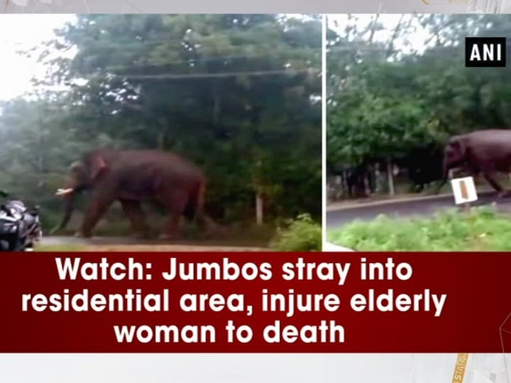Watch: Jumbos stray into residential area, injure elderly woman to death