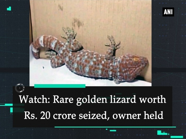 Watch: Rare golden lizard worth Rs. 20 crore seized, owner held