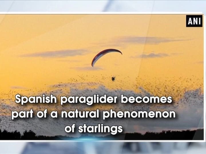 Spanish paraglider becomes part of a natural phenomenon of starlings