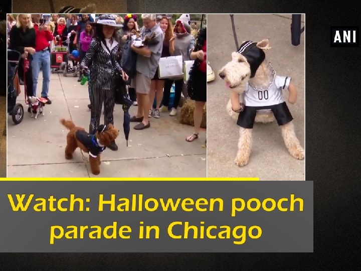 Watch: Halloween pooch parade in Chicago