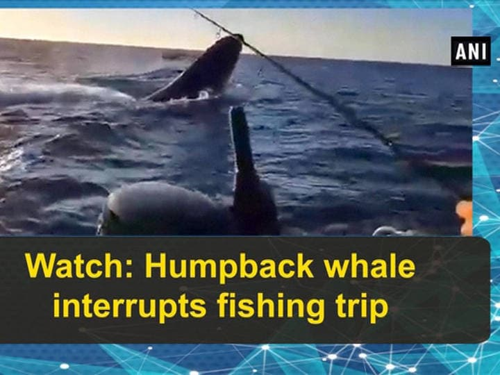 Watch: Humpback whale interrupts fishing trip