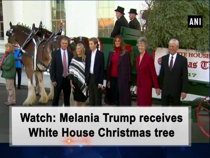 Watch: Melania Trump receives White House Christmas tree