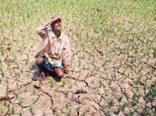 Irrigated winter crop in Bengal has taken a hit