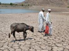 Drought cripples farm sector