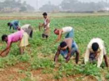 India: An agricultural powerhouse of the world