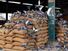 Govt cuts import duty on wheat, potato and palm oil