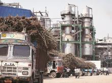 Sugar millers, Maharashtra, drought, plantation, sugar