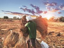 agriculture, farm, farmer