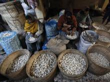 Garlic, garlic prices, Mandsaur