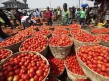 Tomato prices harden, hit Rs 80 per kg in national capital