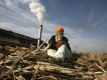 Govt to lift sugar stockholding cap; may raise duty if price fall persists