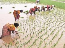 Farmer, crop, farming