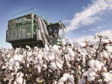 Cotton crop estimate to be lowered, on pest attack, less yield