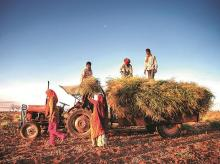 agriculture, farming, crops, cultivation