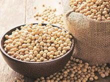 Soybean output to decline by 24% on lower acreage, crop damage: SOPA