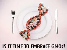 Have GMOs really had an adverse impact on the health of its consumers?
