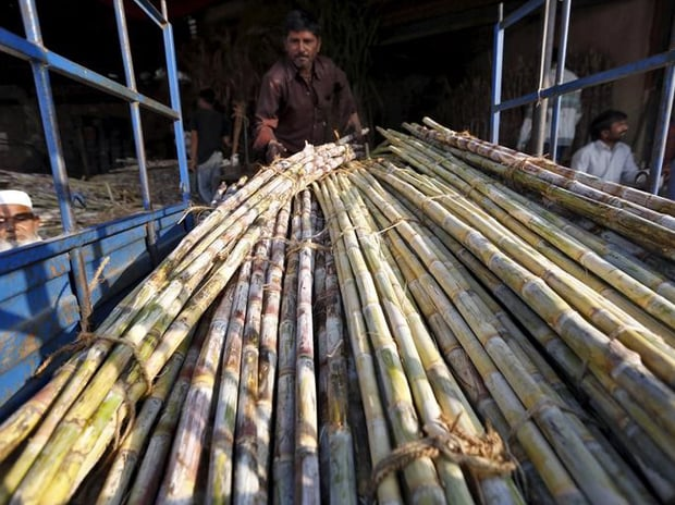 A worker loads sugarcane into a load carrier at a wholesale market in Ahmedabad. Photo: Reuters